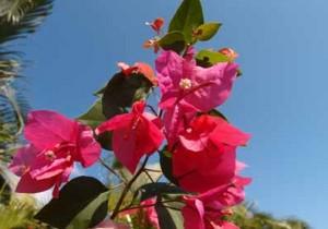 15-Miami-Pink