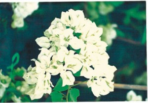 31-Java-White