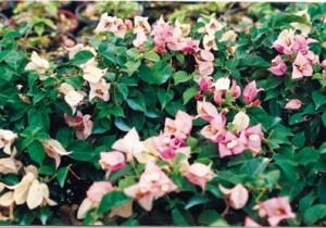 42-Carpet-Pink