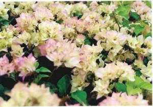 47-Bridal-Bouquet
