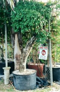 45 Gl Stump 1