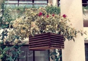 Hanging Baskets 1