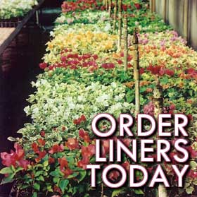 order liners today