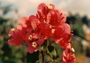 53-Tropical Bouquet